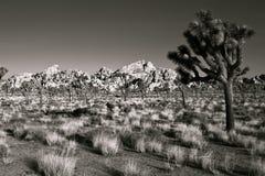 Joshua Drzewa Park Narodowy zdjęcie stock