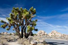 Joshua drzewa park narodowy Zdjęcia Stock