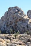 Joshua drzewa park narodowy Obraz Stock