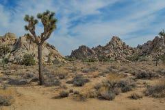Joshua drzewa park narodowy Kalifornia Obrazy Royalty Free