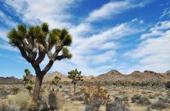 Joshua drzewa park narodowy, Mojave nieba obrazy stock