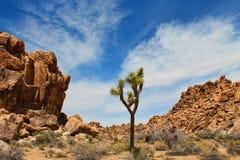 Joshua drzewa parka narodowego krajobraz Obrazy Royalty Free