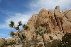 Joshua drzewa parka narodowego pustyni krajobraz Zdjęcia Stock