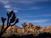 Joshua drzewa parka narodowego pustynia Obraz Stock