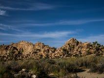 Joshua drzewa parka narodowego pustynia Zdjęcia Royalty Free