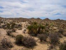 Joshua drzewa parka narodowego pustynia Zdjęcie Royalty Free