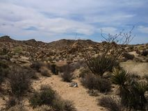 Joshua drzewa parka narodowego pustynia Fotografia Stock