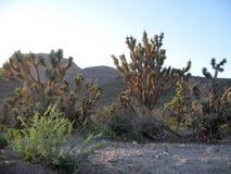 Joshua drzewa przy Uroczystego jaru Zachodnim obręczem w Północno-zachodni Arizona Zdjęcie Stock