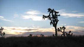 Joshua drzewa przy Uroczystego jaru Zachodnim obręczem w Północno-zachodni Arizona Zdjęcie Royalty Free