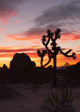 Joshua drzewa zmierzchu chmury krajobrazu Kalifornia park narodowy Fotografia Stock