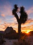 Joshua drzewa zmierzchu chmury krajobrazu Kalifornia park narodowy Zdjęcie Stock