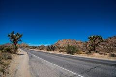 joshua nationalparktree Arkivbild