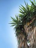 joshua nieba drzewo Obrazy Royalty Free