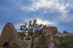 Joshua skały przy Joshua drzewa parkiem narodowym i drzewo Zdjęcie Stock
