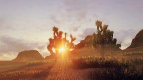 Joshua träd och rött vaggar på solnedgången Tid schackningsperiod