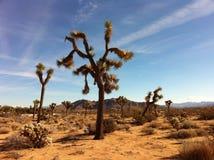 Joshua Tree ökenlandskap Arkivbild