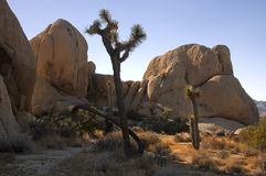Joshua Tree 1. Rock Formations In High Desert,Joshua Tree, California royalty free stock photo