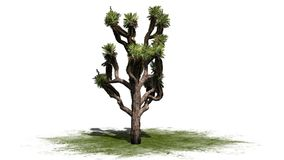 Joshua Tree illustration libre de droits