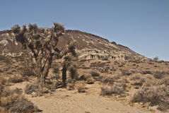 Joshua Tree. This is a view of a Joshua Tree from Red Rock Canyon State Park in California stock images