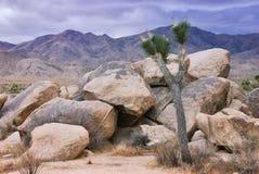 Joshua Tree. Twilight in Joshua Tree national park in California stock image
