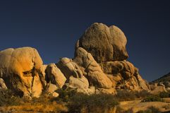 Joshua Tree 2 stock images