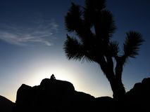 Joshua Tree. A person sits on boulders at Joshua Tree National Park to watch the sunset Royalty Free Stock Photography