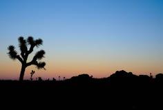 Joshua Tree. Sunset at Joshua Tree National Park Stock Photography