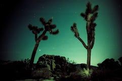 Joshua Tree Imagenes de archivo