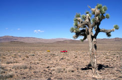Joshua Tree. In Death Valley Royalty Free Stock Image