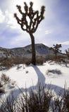Joshua Tree Lizenzfreie Stockfotografie
