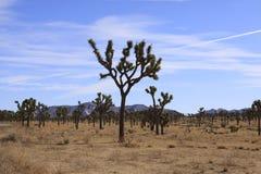 Joshua Tree Stockbild