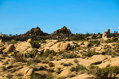 Joshua Tree Imagem de Stock Royalty Free