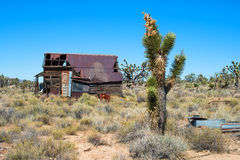 Joshua tree and abandoned house Royalty Free Stock Photos