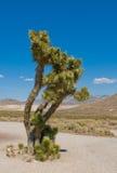 Joshua tree, California Stock Photos