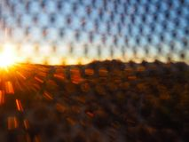 Joshua Tree California på solnedgången royaltyfri bild