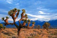 Joshua Tree cloudscape in de Zuidelijke hoge woestijn van Californië dichtbij Palmdale en Lancaster royalty-vrije stock afbeeldingen