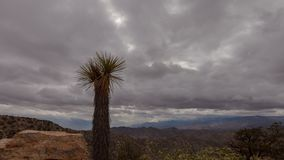 Joshua Tree Cloudscape. Fast moving rain clouds across the Mojave desert stock footage