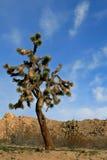 Joshua Tree cloudscape i den sydliga Kalifornien höga öknen nära Palmdale och Lancaster Royaltyfri Bild