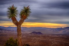Joshua Tree with Colorful Sunrise. Sunrise over desert and Ryan Mountain with lone Joshua Tree in foreground royalty free stock photography
