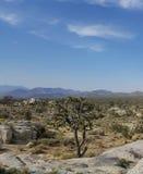 Joshua Tree in der Wüsten-Landschaft stockbild