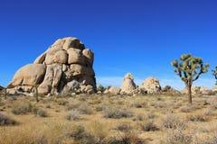 Joshua Tree Desert Fotografía de archivo libre de regalías
