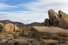 Joshua Tree Desert Day Stock Photo