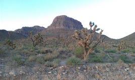 Joshua Tree Desert Landscape at Sunset Stock Photo