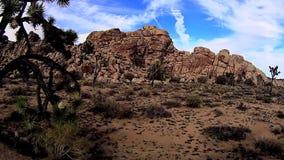 Joshua Tree Desert Scenes almacen de metraje de vídeo