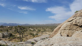 Joshua Tree in Desert Landscape. Joshua Tree in Desert Wilderness Landscape with blue sky and wispy clouds royalty free stock photos