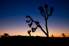 Joshua Tree at Dusk. A silhouetted joshua tree against the twilight sky Royalty Free Stock Photos