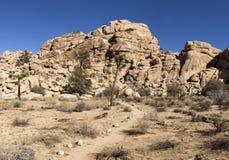 Joshua Tree e le rocce Immagini Stock