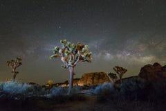 Joshua Tree en la noche Foto de archivo