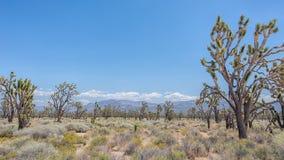 Joshua Tree Forest nationell sylt för Mojave, CA arkivfoton