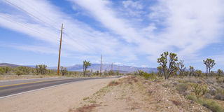 Joshua Tree Forest Panorama Stock Image